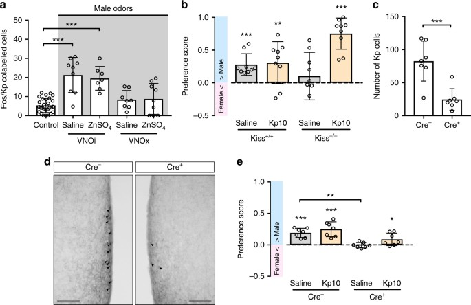 Female sexual behavior in mice is controlled by kisspeptin