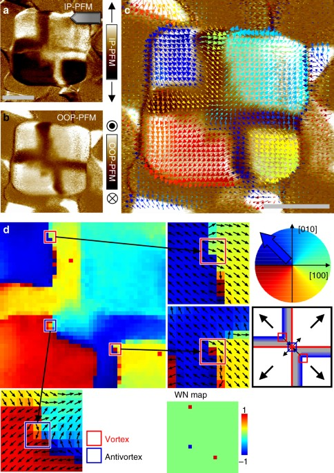 Configurable Topological Textures In Strain Graded Ferroelectric