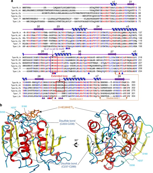Dating amino bio template