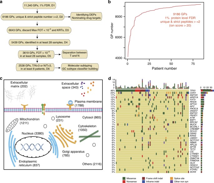 A Proteomic Landscape Of Diffuse Type Gastric Cancer Nature Communications