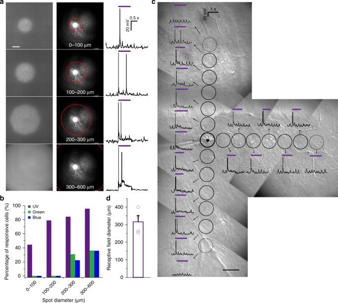 Shedding Light On Developmental Blind >> Nanowire Arrays Restore Vision In Blind Mice Nature Communications
