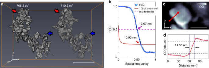 3a703ef00c4168 Results of tomographic reconstruction. a Reconstructed three-dimensional  (3D) optical density volumes at 708.2 (left) and 710.2 eV (right). The size  of ...