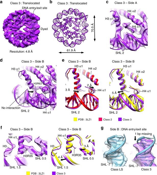 structural rearrangements of the histone octamer