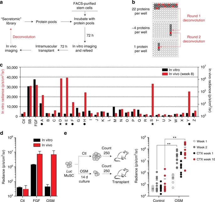 Induction of muscle stem cell quiescence by the secreted niche ...