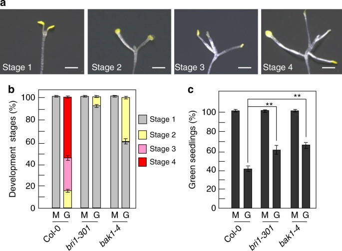 Bri1 And Bak1 Interact With G Proteins And Regulate Sugar Responsive Growth And Development In Arabidopsis Nature Communications It has 90 forms that are used in english and foreign. bri1 and bak1 interact with g proteins