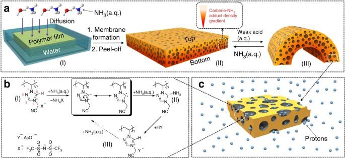 Porous polycarbene-bearing membrane actuator for ultrasensitive weak ...
