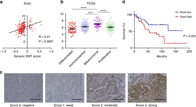 Snail Promotes Ovarian Cancer Progression By Recruiting Myeloid Derived Suppressor Cells Via Cxcr2 Ligand Upregulation Nature Communications