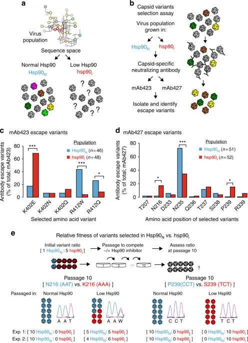 d867fa29b2d3 Hsp90 activity influences viral capsid fitness. a Does Hsp90 activity  influence the sequence space of its client