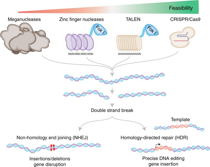 The CRISPR tool kit for genome editing and beyond | Nature