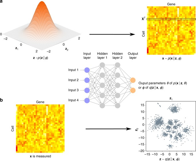 Interpretable dimensionality reduction of single cell