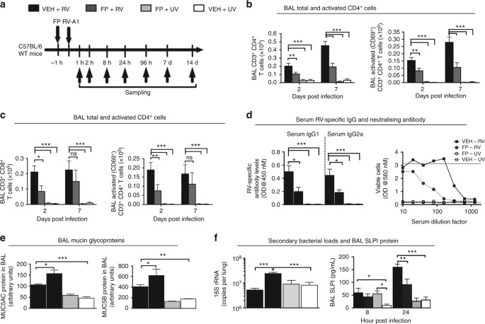 Corticosteroid suppression of antiviral immunity increases bacterial loads and mucus production in COPD exacerbations