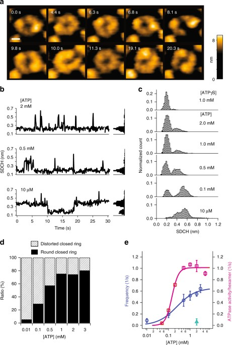 dynamic structural states of clpb involved in its disaggregation