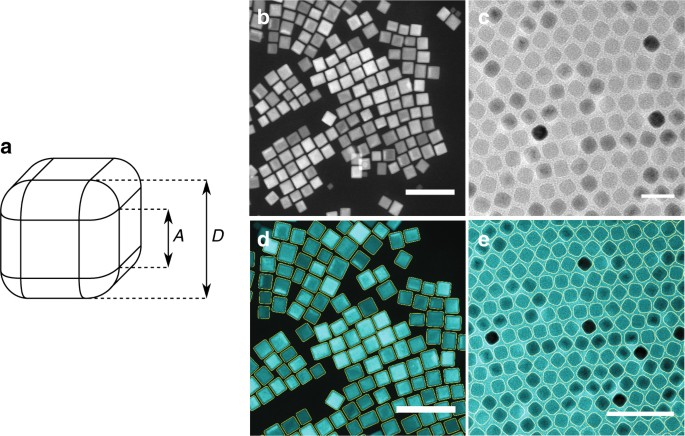Interplay Between Spherical Confinement And Particle Shape On The