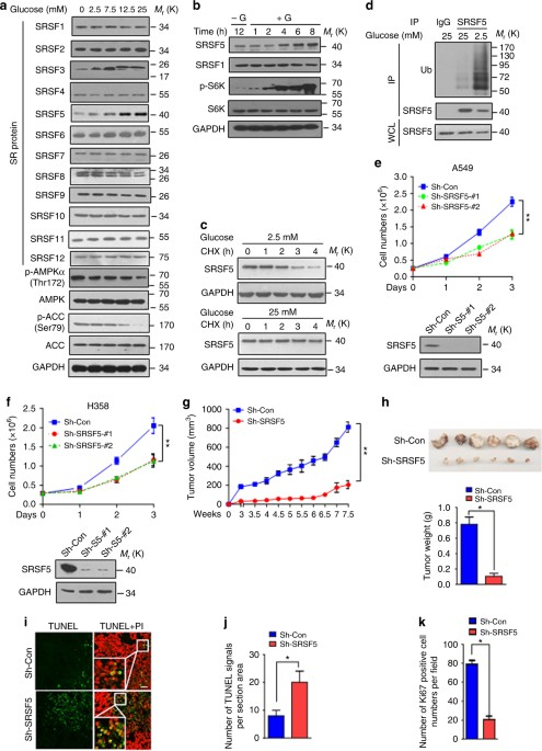 Mutually exclusive acetylation and ubiquitylation of the
