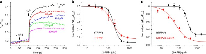 2 Apb Inhibition Of Ca2 Uptake Through Wild Type And Mutant Trpv6 Channels A Ratiometric Fura 2 Fluorescence Curves Recorded From Hek 293 Cells Expressing