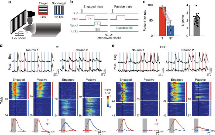 Task-dependent representations of stimulus and choice in