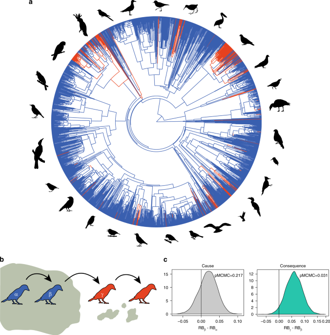 Predictable Evolution Towards Larger Brains In Birds Colonizing
