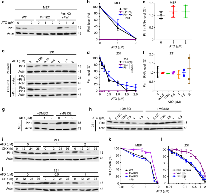 Arsenic targets Pin1 and cooperates with retinoic acid to inhibit