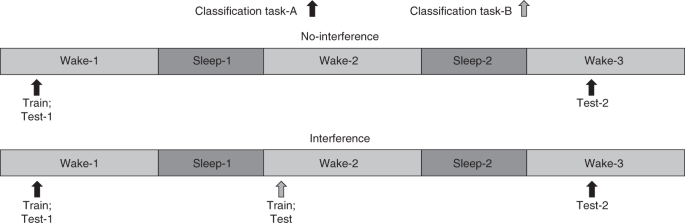 which statement about stage four sleep is incorrect