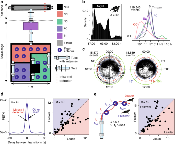 Social interactions impact on the dopaminergic system and