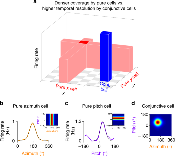 Optimal dynamic coding by mixed-dimensionality neurons in