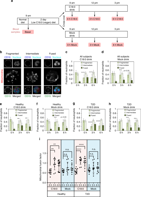 dietary stearic acid regulates mitochondria in vivo in humans