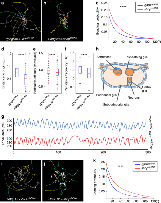 the sulfite oxidase shopper controls neuronal activity by regulating
