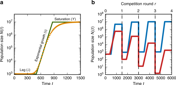 Growth tradeoffs produce complex microbial communities on a