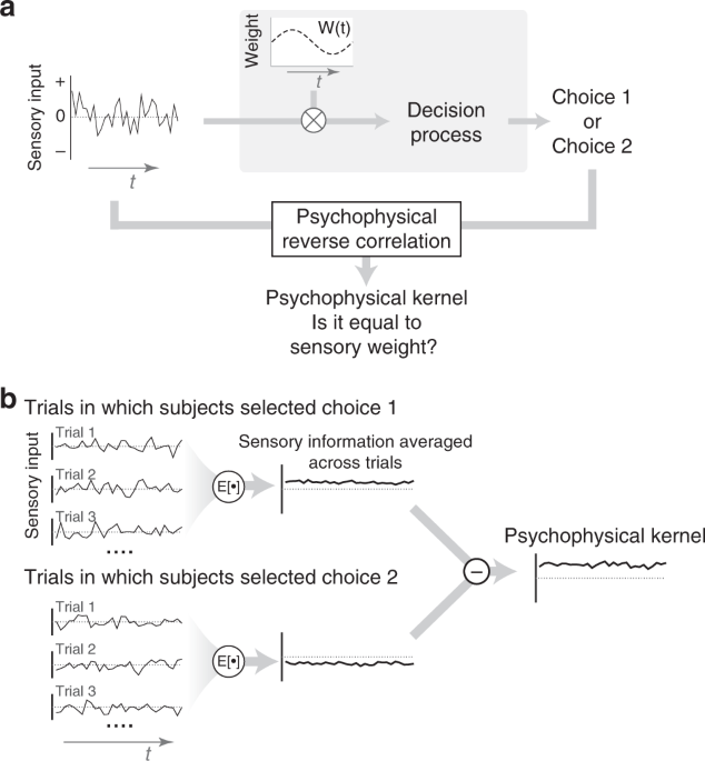 Psychophysical reverse correlation reflects both sensory and