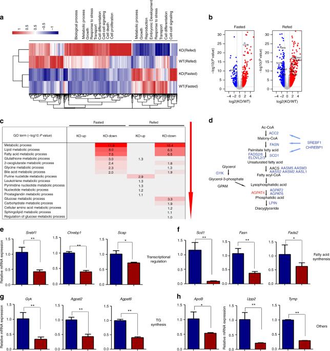 ER-associated ubiquitin ligase HRD1 programs liver metabolism by targeting multiple metabolic enzymes