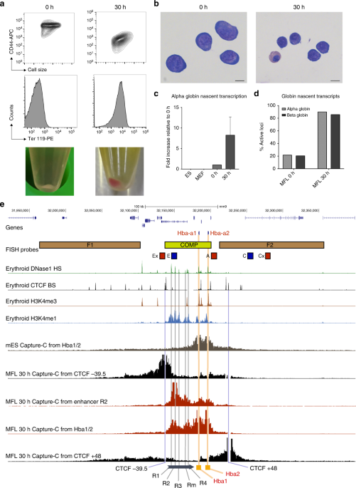 nature.com - A tissue-specific self-interacting chromatin domain forms independently of enhancer-promoter interactions