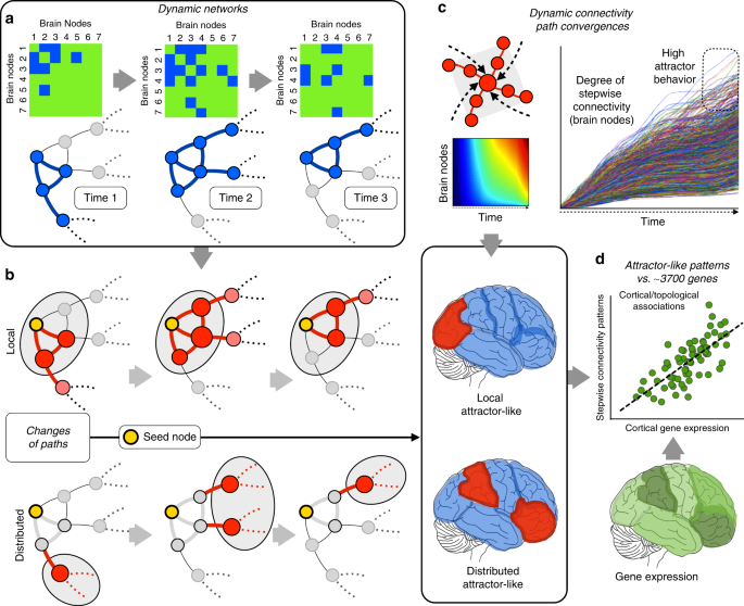 Neurogenetic profiles delineate large-scale connectivity