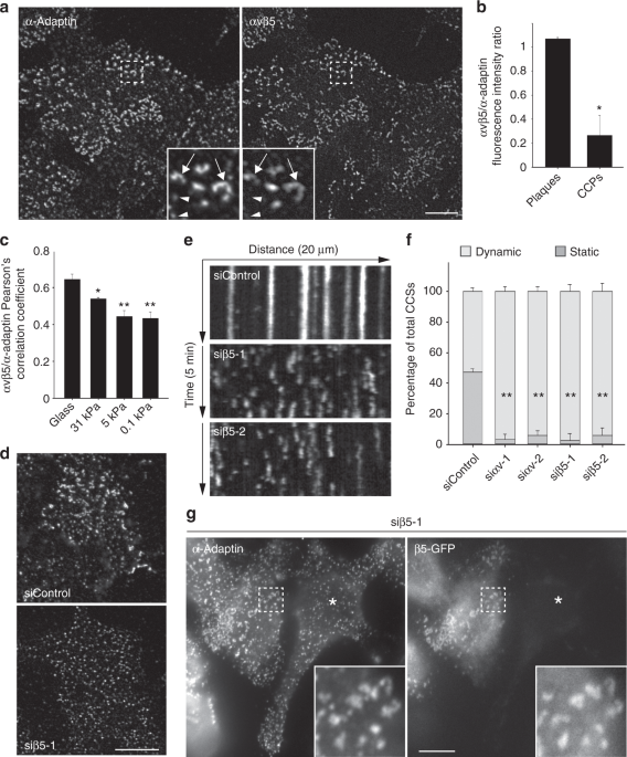 Frustrated Endocytosis Controls Contractility Independent