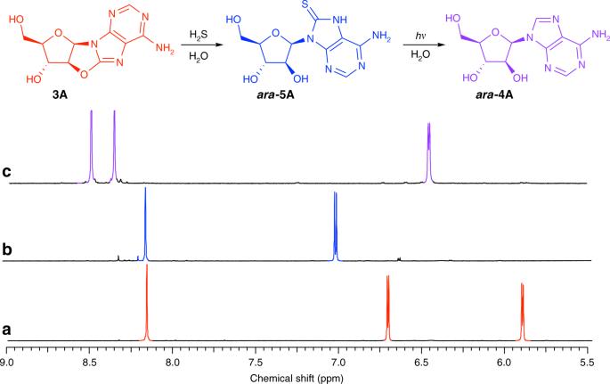 Selective Prebiotic Conversion Of Pyrimidine And Purine