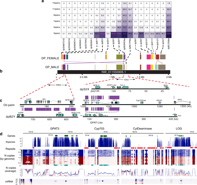 Genus-wide sequencing supports a two-locus model for sex-determination in <i>Phoenix</i>