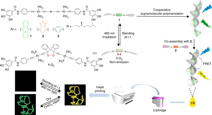 Cooperative supramolecular polymers with anthracene‒endoperoxide