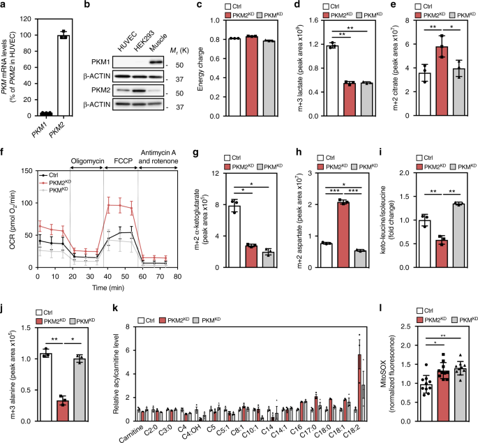 loss of pyruvate kinase m2 limits growth and triggers innate immune rh nature com