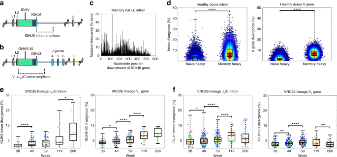 Sequencing hiv neutralizing antibody exons and introns reveals fig 1 malvernweather Gallery