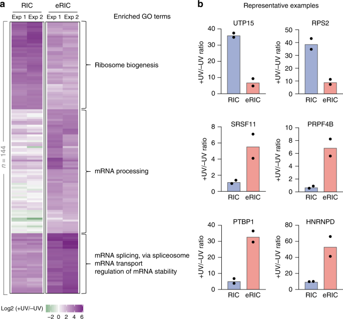Discovery of RNA-binding proteins and characterization of