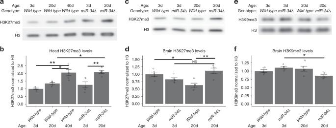 MiR 34 inhibits poly b repressive plex 2 to modulate chaperone