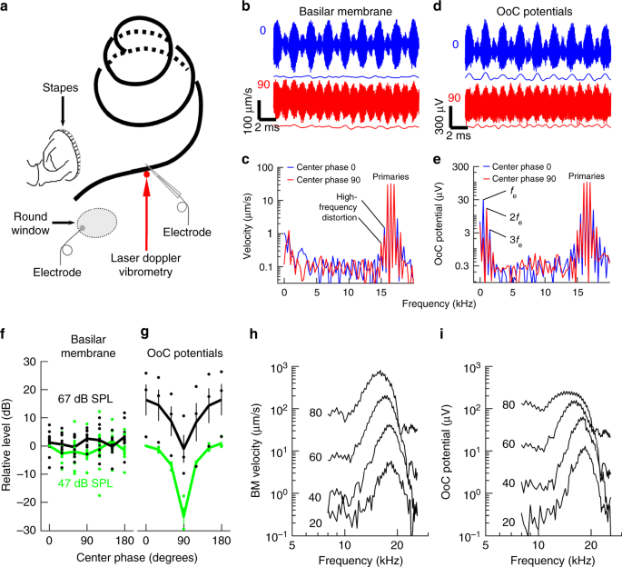 Fabulous A Mechanoelectrical Mechanism For Detection Of Sound Envelopes In Wiring 101 Swasaxxcnl