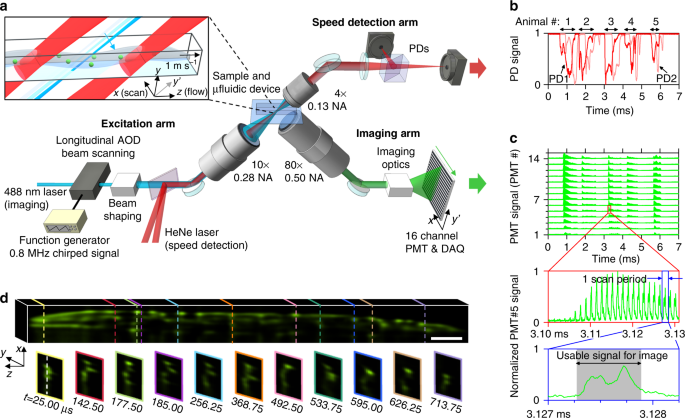 Overview Of 08 Million Frames Per Second Line Excitation Array Detection LEAD Fluorescence Microscopy Implemented As A 3D Whole Animal Flow Cytometer
