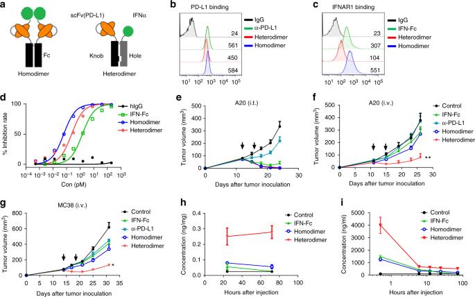 targeting ifn u03b1 to tumor by anti
