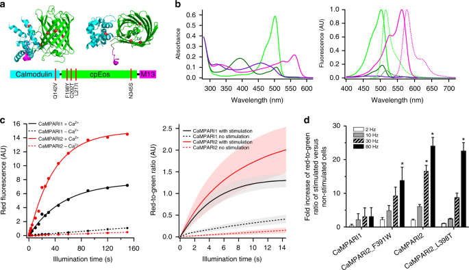 Improved methods for marking active neuron populations | Nature