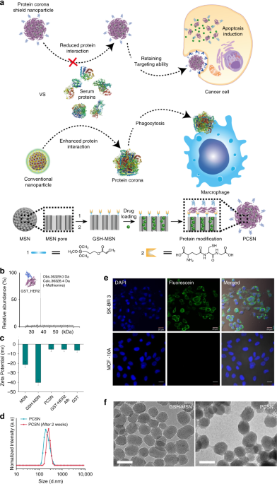 cloaking nanoparticles with protein corona shield for