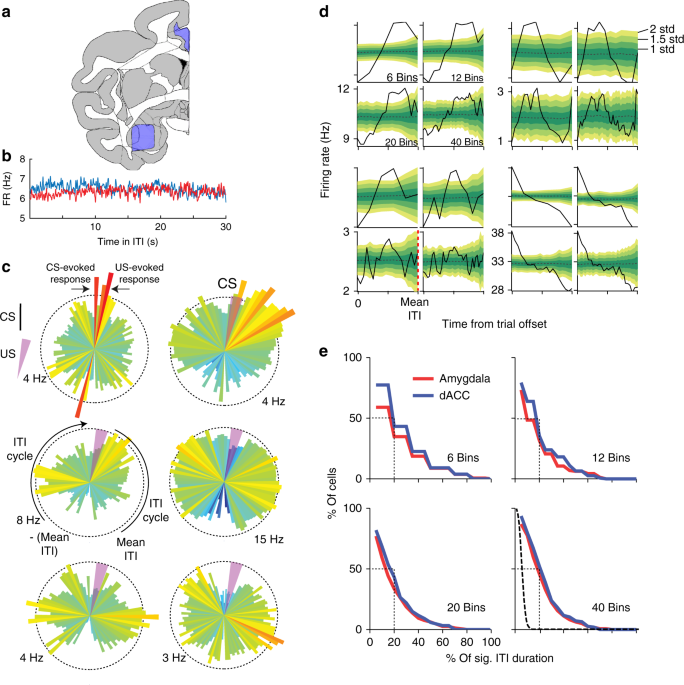 Long time-scales in primate amygdala neurons support aversive learning