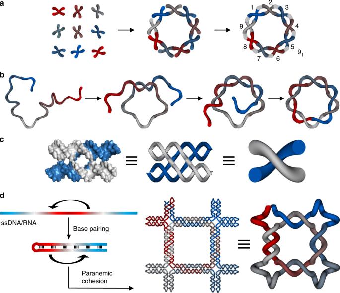 Programming Molecular Topologies From Single