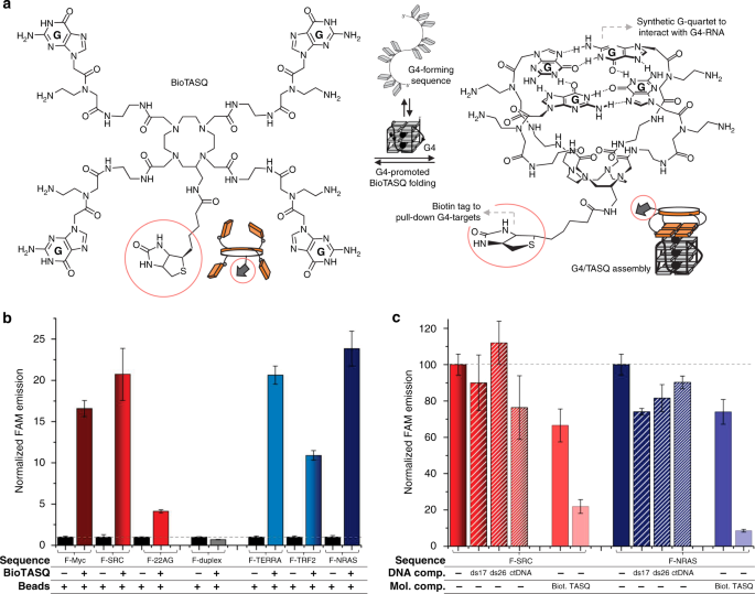 Characterization Of G4 Specific Affinity BioTASQ A Structure Displaying Biotin Tag Red Circles And Schematic Representation