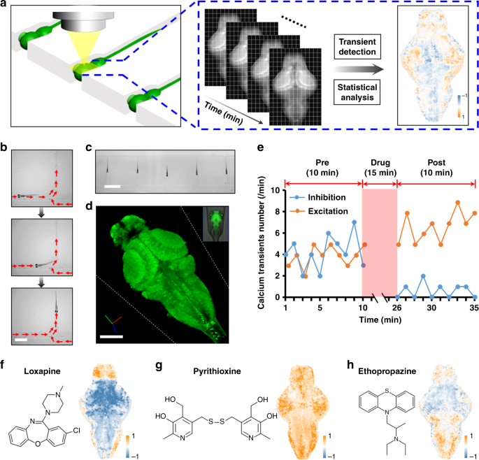 High-throughput brain activity mapping and machine learning