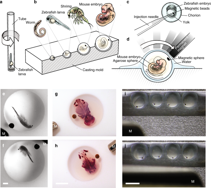 Dynamic and non-contact 3D sample rotation for microscopy